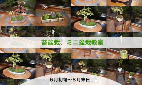 苔盆栽、ミニ盆栽教室