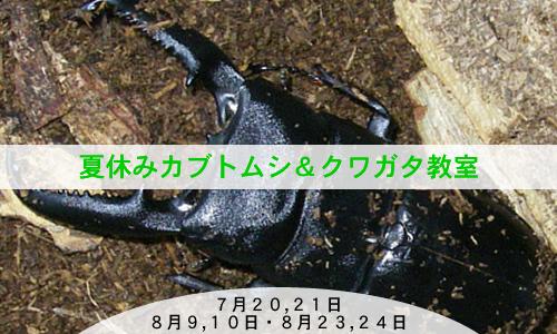 夏休みカブトムシ&クワガタ教室